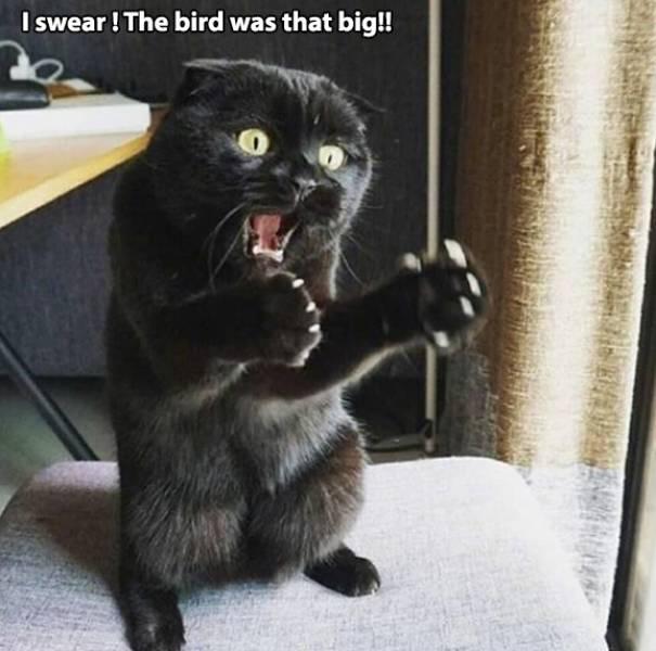 birdvig.jpg