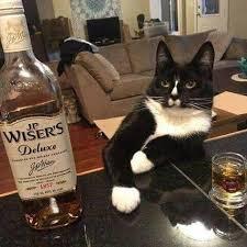 Cat on the bar.jpg