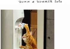 dumm_k.jpg