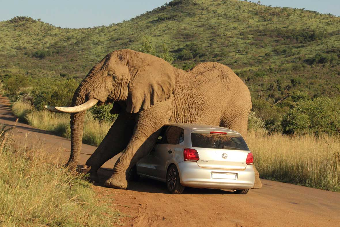 elephant-car-scratch-4-2014-08-08.jpg