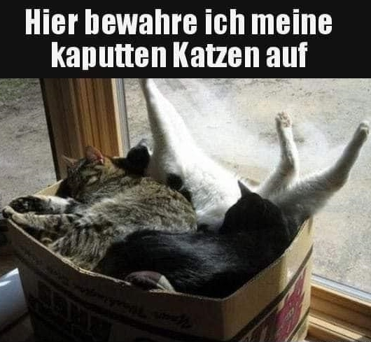 kaputte Katzen.jpg