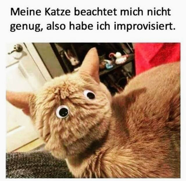 KatzeBeachtung.jpg