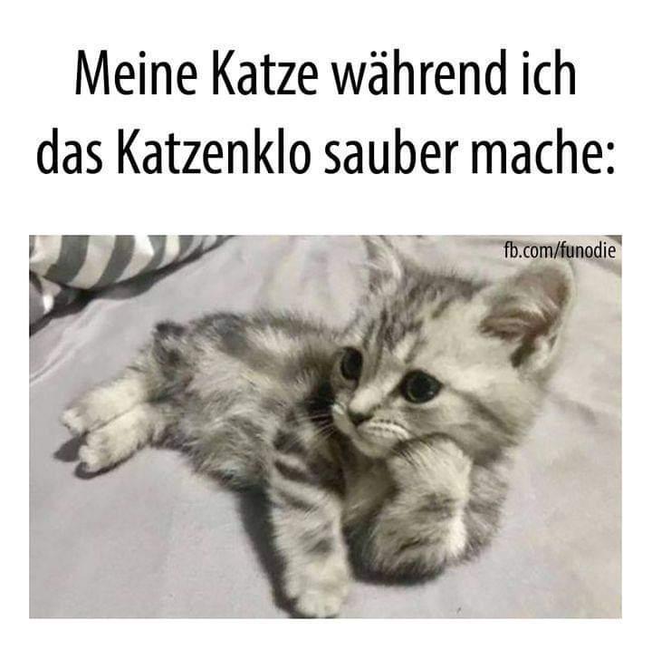 Katzenklo.jpg