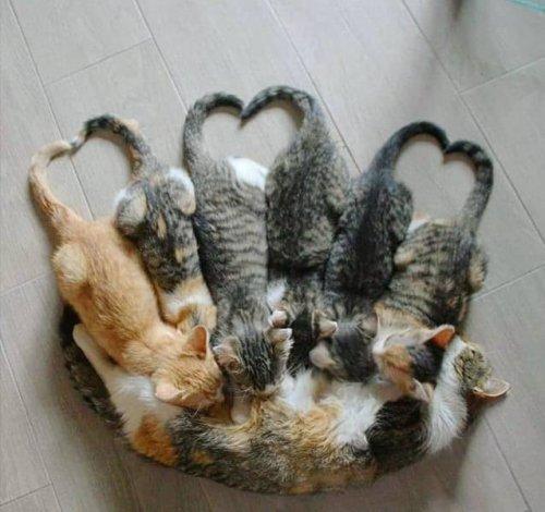 KatzenLiebe.jpg