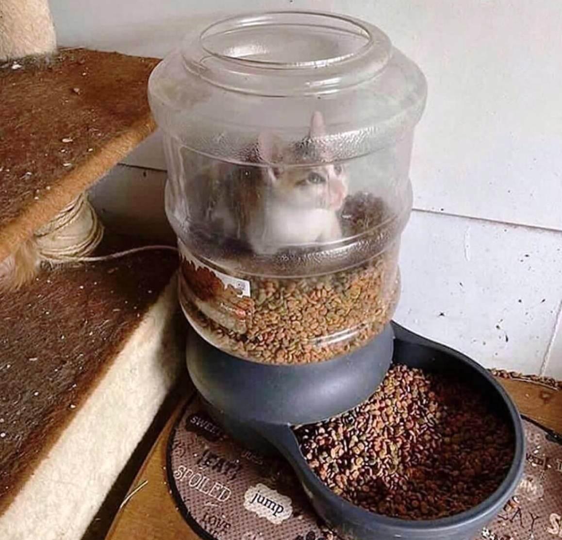 Katzessen.jpg