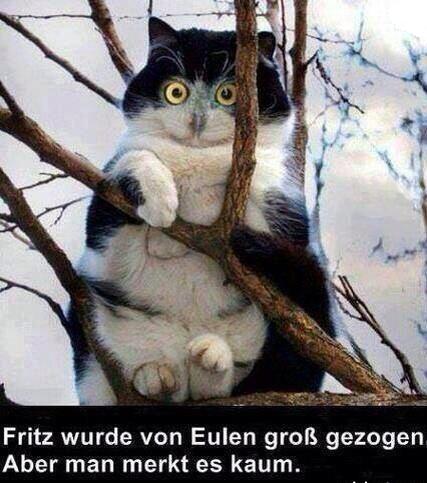 Katzeule.jpg