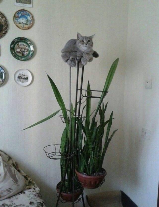 Katzorchideen.jpg