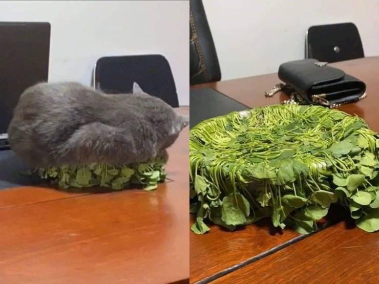 Katzpflanzen.jpg