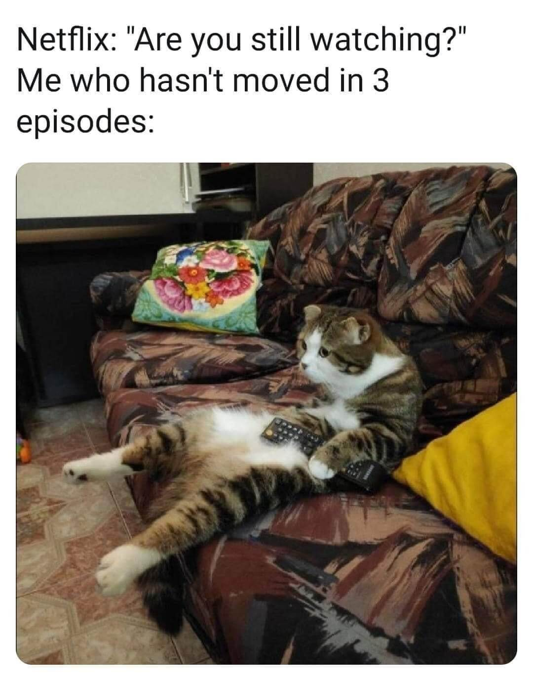 Netflix Katz.jpg