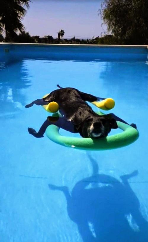 Pooldog.jpg