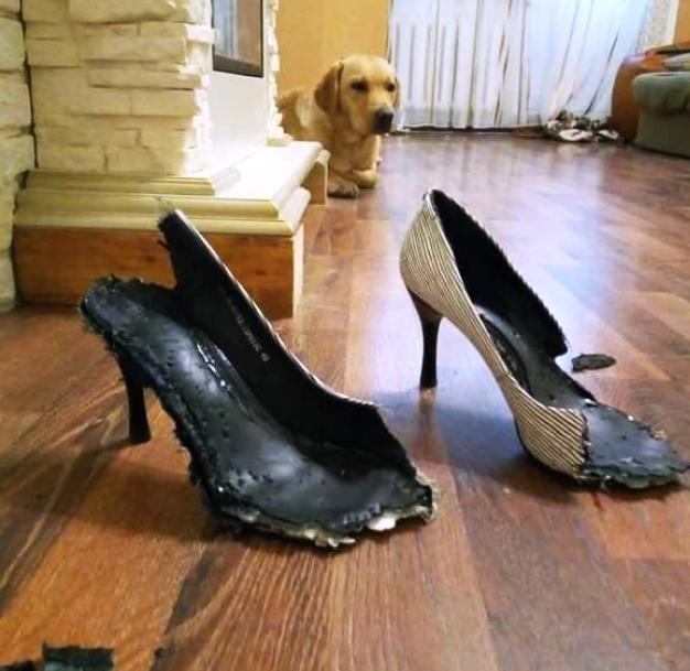 schuhehund.jpg