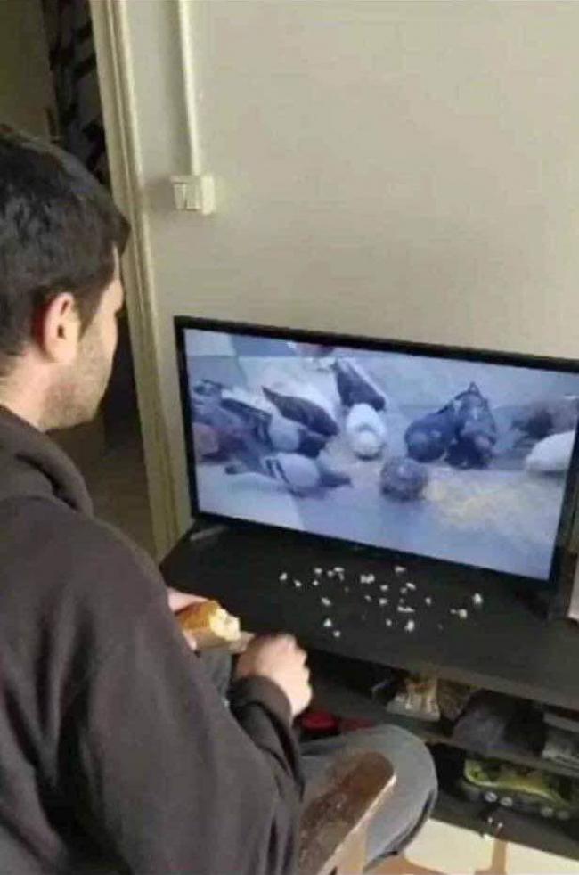 Tauben Füttern.jpg