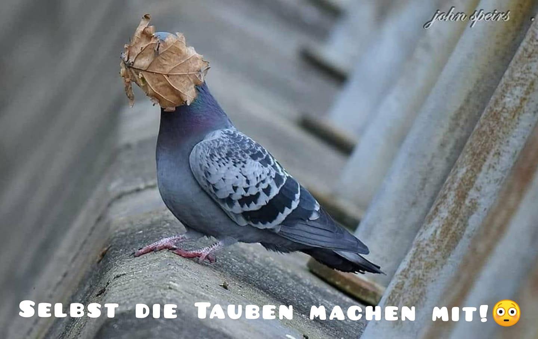 Tauben.jpg