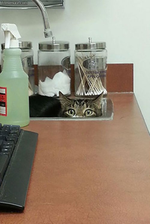 Tierarzt.jpg